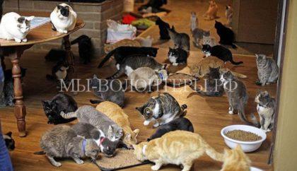 Житель Медфорда превратил собственный дом в приют для 300 кошек