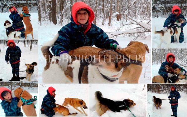 Зимние лесные прогулки с подопечными, приют Щербинка, февраль 2018