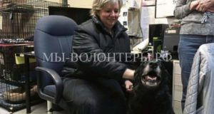 Лабрадор Эбби вернулась в семью спустя 10 лет после пропажи