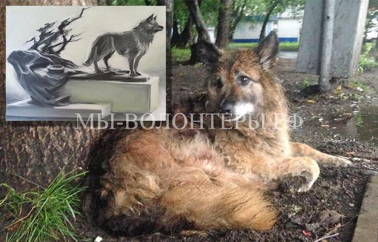 Памятник Найде.В Комсомольске-на-Амуре собака 12 лет ждала погибшего хозяина