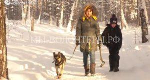 Пес-инвалид обрел любящую семью в Новосибирске