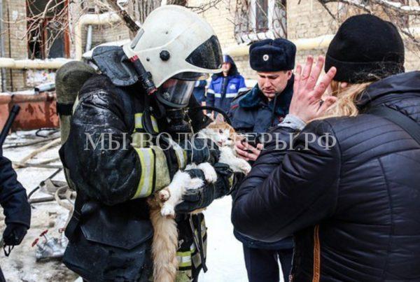 Волгоградские пожарные реанимировали кота, задохнувшегося во время пожара