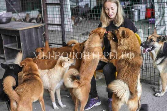 Российские волонтеры спасают собак с китайских собачьих ферм