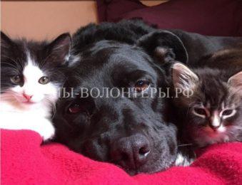Бывшая бездомная собака стала приемной мамой для приютских котят