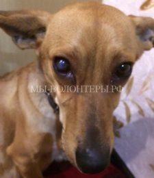 Как спасали беременную собаку, умирающую на морозе