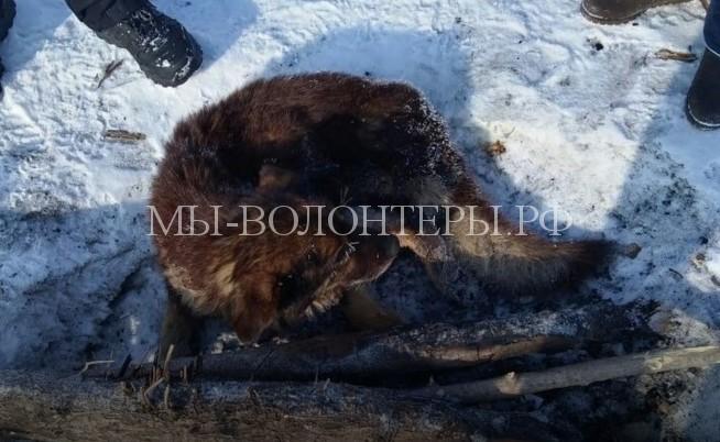 Рыбаки спасли собаку, примерзшую ко льду