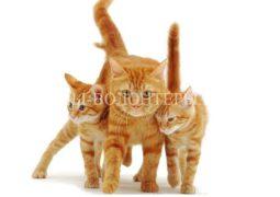Акция по пристройству кошек