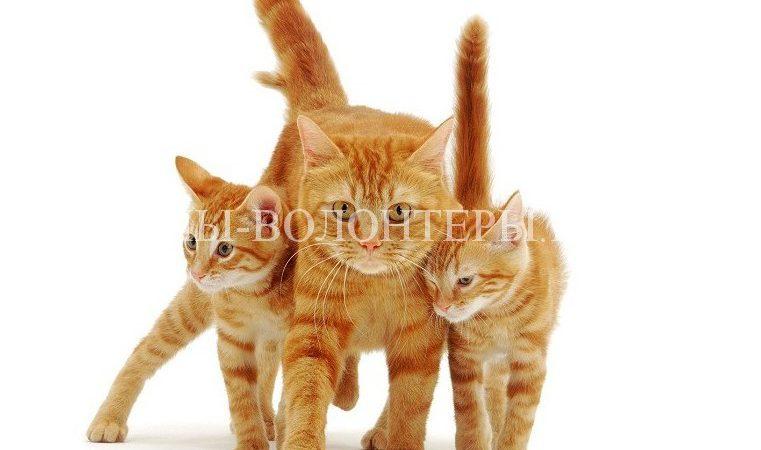 Акция по пристройству кошек «Все оттенки кошачьего»