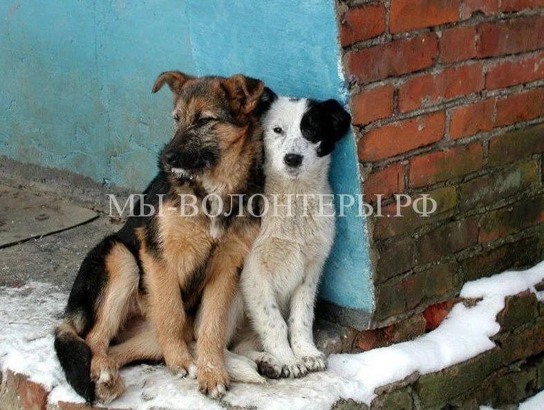 В Красноярске – столице Всемирной зимней Универсиады 2019 года — будет построен первый частный приют для собак