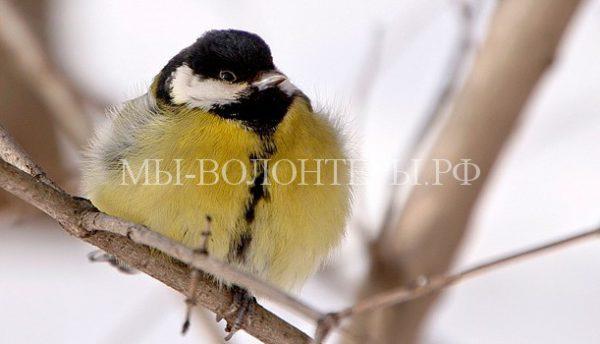 Экологи просят москвичей подкормить птиц, чтобы помочь им пережить морозы