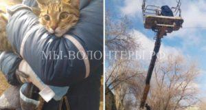 Жители Астрахани в складчину наняли автовышку, чтобы спасти кота