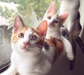 Бездомная кошка сама пришла в дом к человеку и принесла своих котят