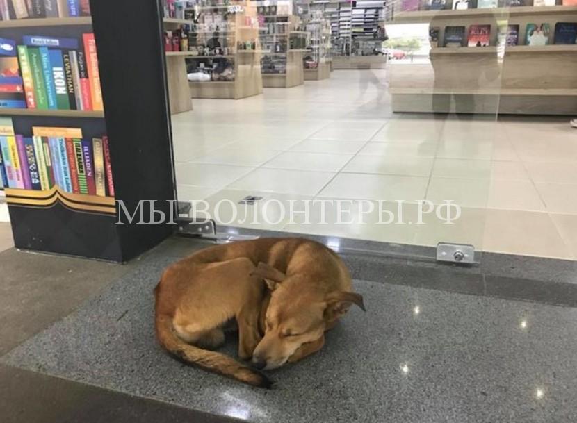Бездомный пес прилег у входа в книжный магазин и это изменило его жизнь