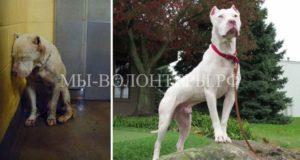 10 счастливых морд - эти собаки теперь живут в семье