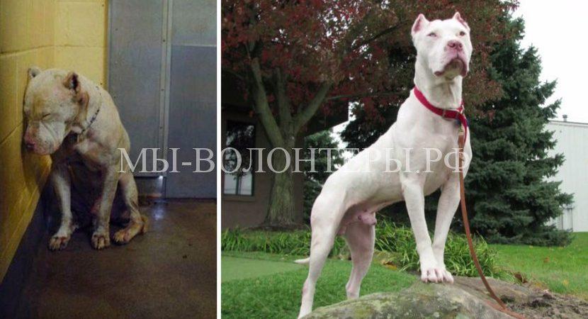 10 счастливых морд — эти собаки теперь живут в семье