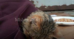Петербуржцы ищут донора для избитого бездомного котенка