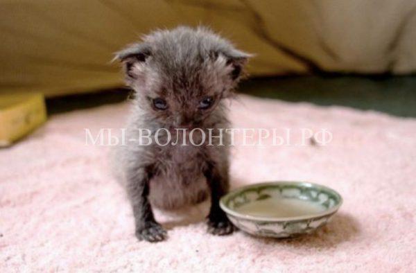 Спасение новорожденного котенка
