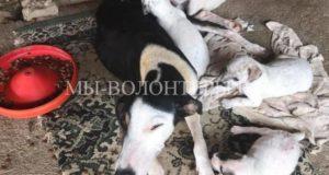 Спасение собаки и ее щенков, выброшенных в мешке на дорогу
