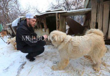 Спортсмен приехал в Корею на Олимпиаду и спас более 90 собак от неминуемой гибели