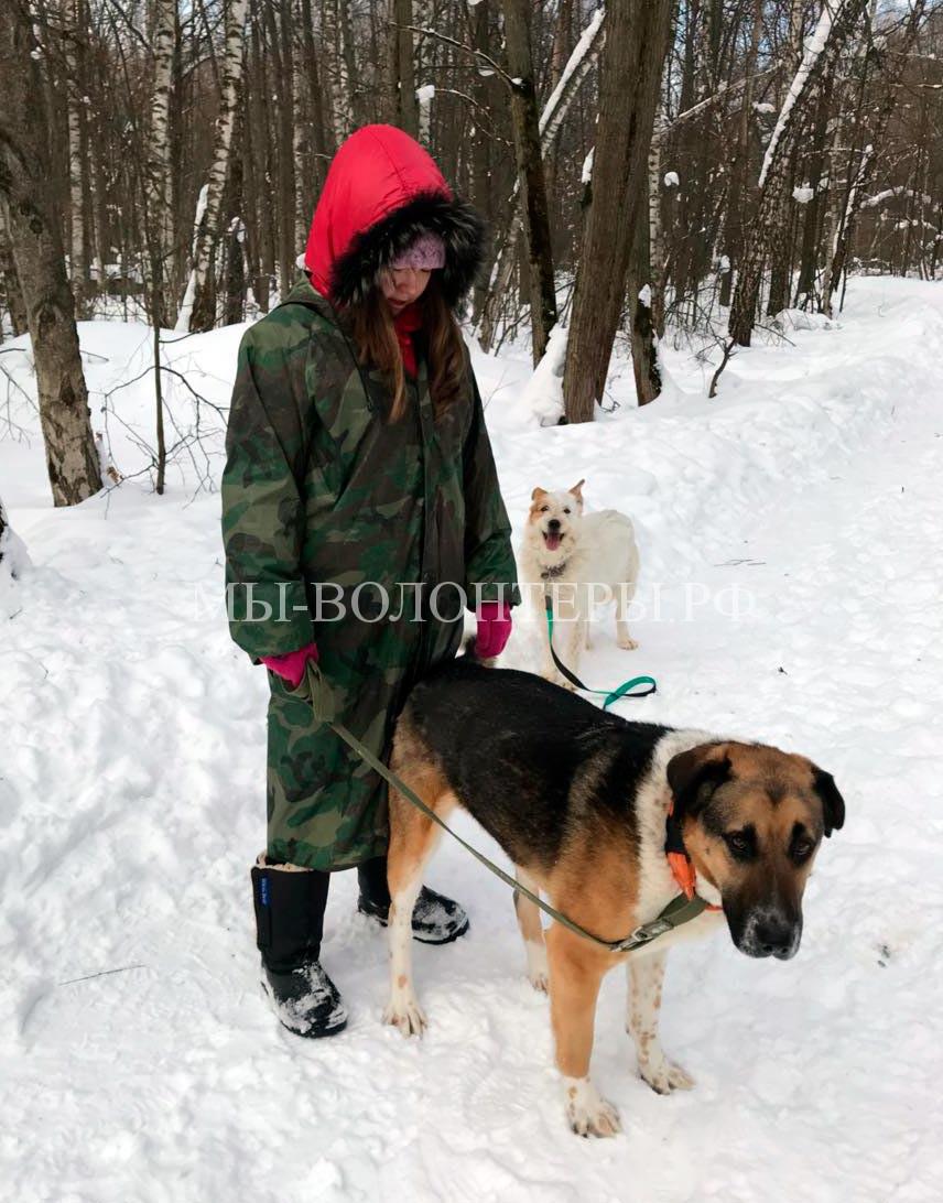 Волонтер Дина в приюте Щербинка с Цезарем на прогулке