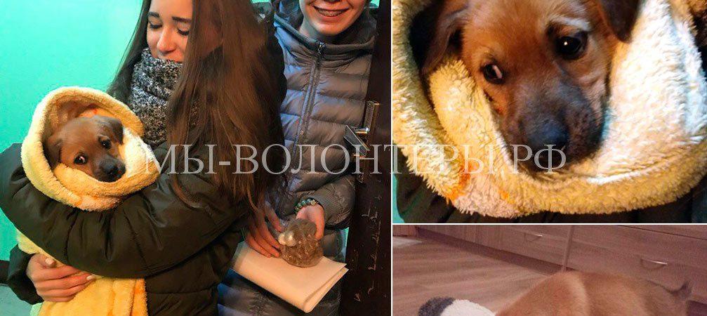 Девочка-щенок, спасенная коллегой-волонтером Марией, нашла дом и зовут её Луна !