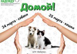 24 и 25 марта пройдет выставка-пристройство приютских животных