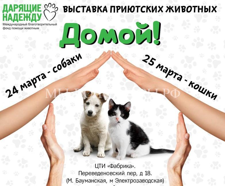 24 и 25 марта пройдет выставка-пристройство приютских животных «Домой!»