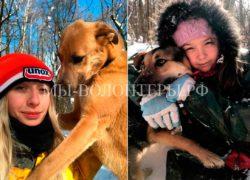 Один воскресный день из жизни волонтеров приюта Щербинка