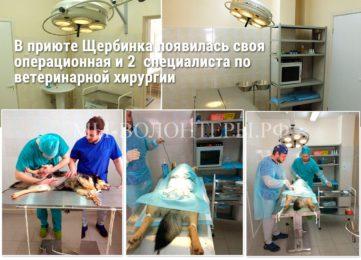 В приюте «Щербинка» появилась своя операционная и 2 специалиста по ветеринарной хирургии!