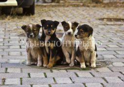 В нескольких российских городах к ЧМ-2018 увеличат количество приютов для бездомных животных