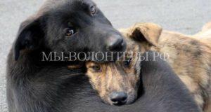 Электронная база отловленных бездомных животных создается в Подмосковье