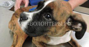 Живодер приговорён к 12 годам тюремного заключения за жестокое обращение с животным