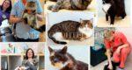 Акция «Кошки нашего двора!» жителей мкр . Северный (Домодедово)