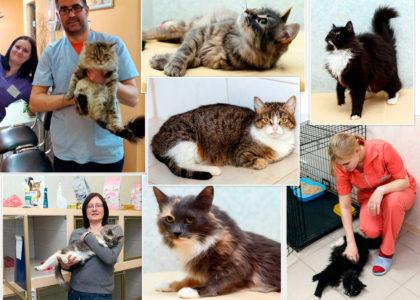 """Акция в помощь бездомным кошкам """"Кошки нашего двора"""""""