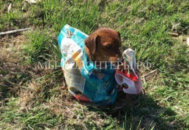 Семейная пара спасла собаку, оставленную умирать на обочине дороги