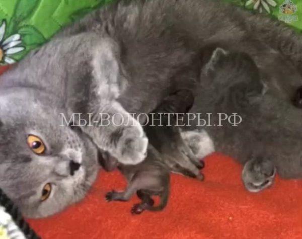 Кошка заменила мать троим новорожденным енотам