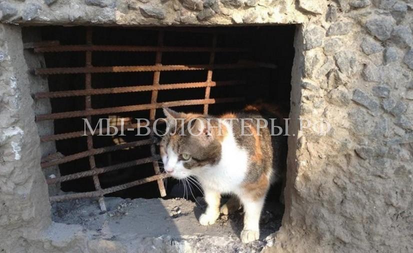 Министерство строительства и ЖКХ РФ законодательно запретило замуровывание подвальных отверстий,для того, чтобы кошки могли выходить из подвала и заходить в подвал