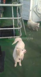 Экипаж траулера со спасенными щенками пришвартовался в порту Находка