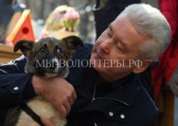 Сергей Собянин взял домой щенка из приюта