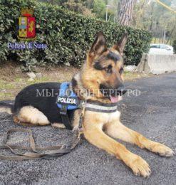 Полициявзяла наслужбу подобранного наулице щенка немецкой овчарки