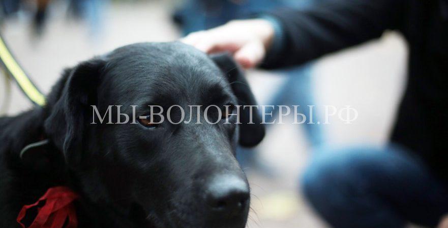 Помощь бездомным животным на фестивале «Пасхальный дар»