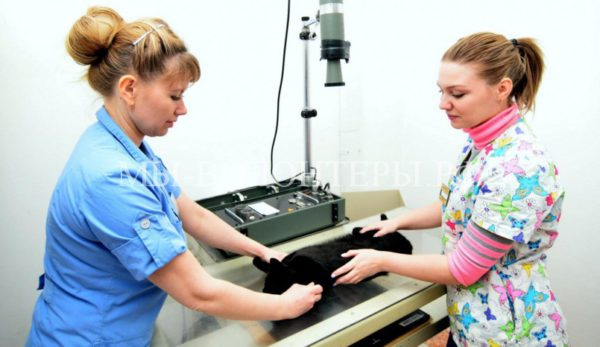 Проект «Доступная ветеринария»