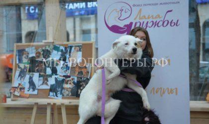 Мэр Москвы Сергей Собянин призвал москвичей помочь бездомным животным