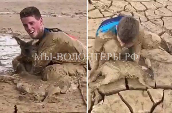 Спасение кенгуренка, увязшего в глиняной топи