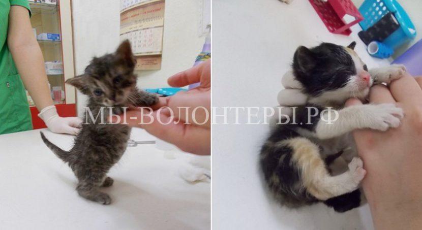 Спасатели и волонтеры спасли кошку и 5 котят из трубы теплотрассы