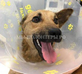 Спасение собаки, попавшей в капкан
