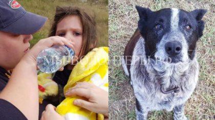 Старый преданный пес согревал и охранял потерявшуюся девочку