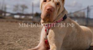 У брошенной и спасенной собаки вернулось доверие к людям