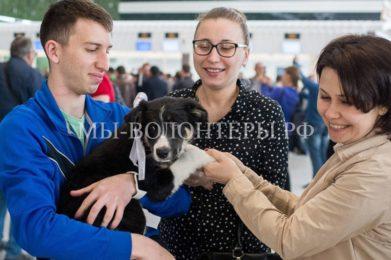 Бордер-колли Алиса стала талисманом нового аэропорта Симферополя
