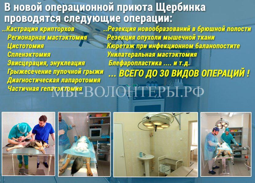 В новой операционной приюта Щербинка проводятся следующие операции, перечень